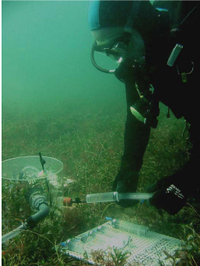 Adelaide_seagrass_biotic_measuremen