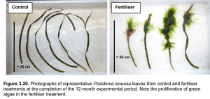 Adelaide_seagrass_nutrient_respon_3