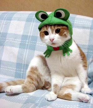 Froggy_cat